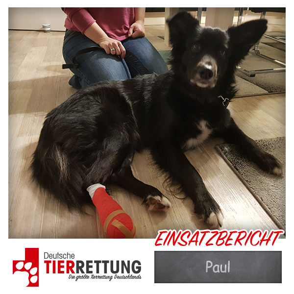 Tierrettung Einsatz: Paul in Viersen