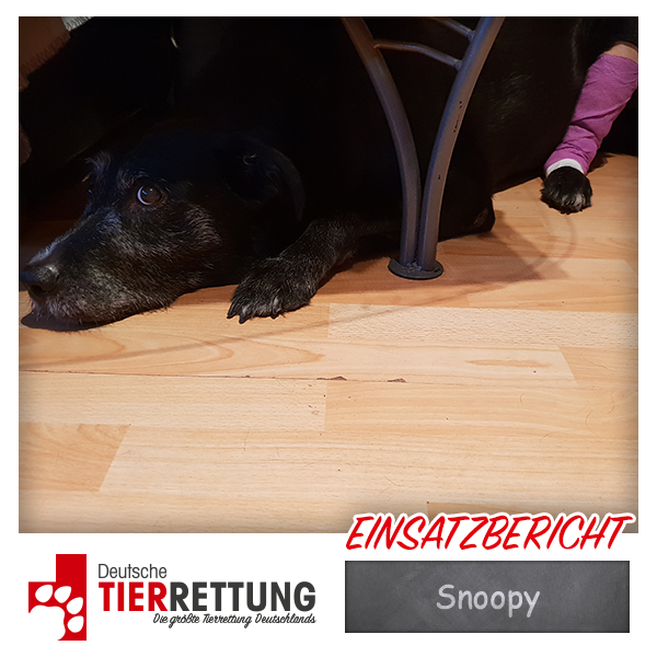 Tierrettung Einsatz: Snoopy in Neuss