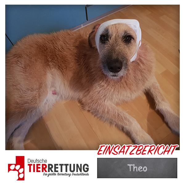 Tierrettung Einsatz: Theo in Oberhausen