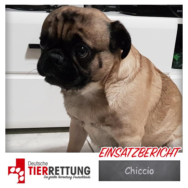 Tierrettung Einsatz: Chiccio in Remscheid