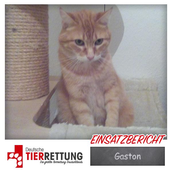 Tierrettung Einsatz: Gaston in Bochum