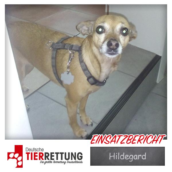 Tierrettung Einsatz: Hildegard in Marl