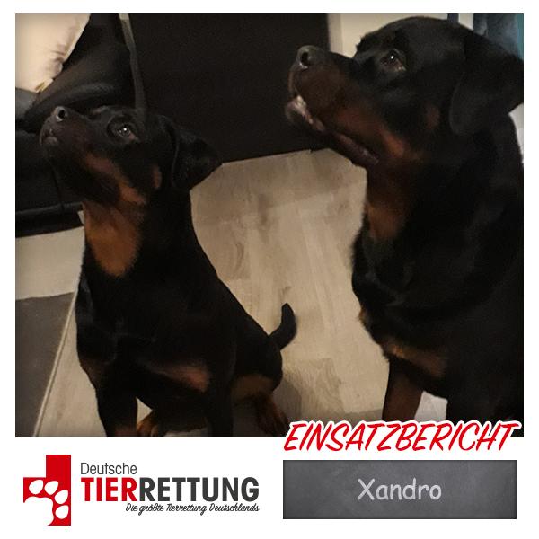 Tierrettung Einsatz: Xandro in Velbert
