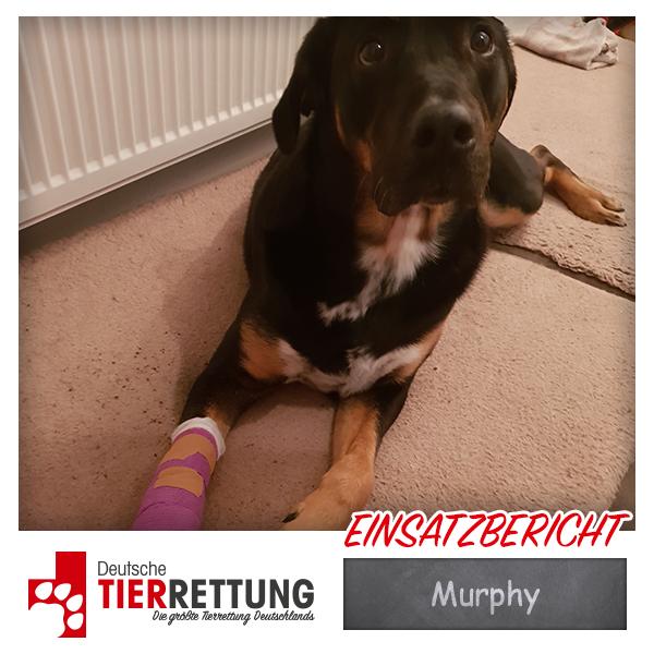 Tierrettung Einsatz: Murphy in Wuppertal