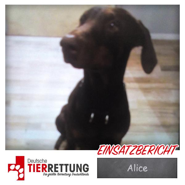 Tierrettung Einsatz: Alice in Hagen