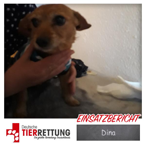 Tierrettung Einsatz: Dina in Hagen