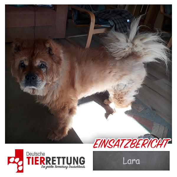 Tierrettung Einsatz: Lara in Dortmund
