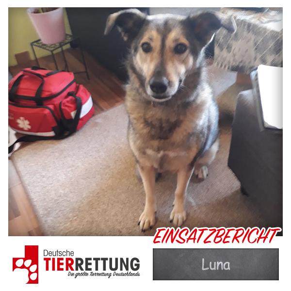 Tierrettung Einsatz: Luna in Essen