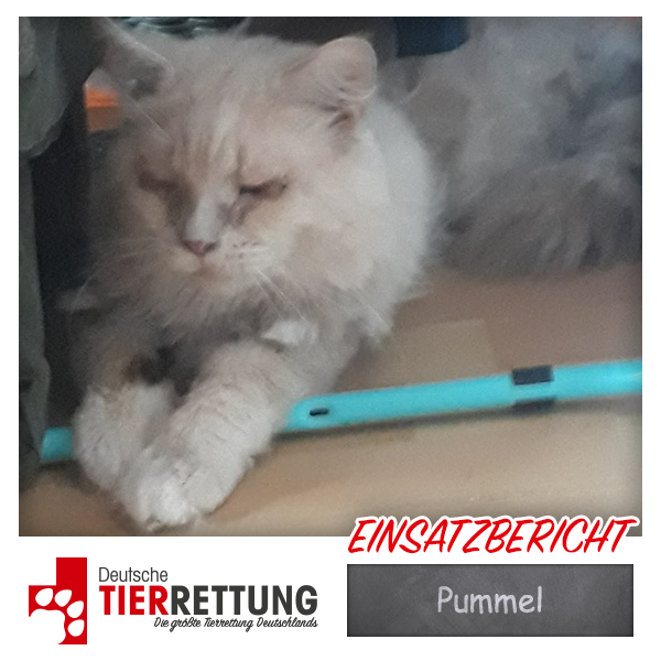 Tierrettung Einsatz: Pummel in Castrop-Rauxel