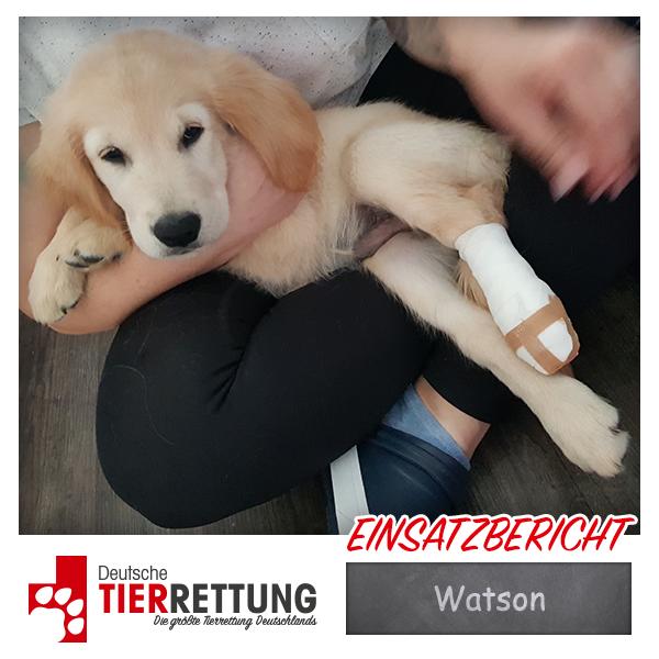 Tierrettung Einsatz: Watson in Dortmund