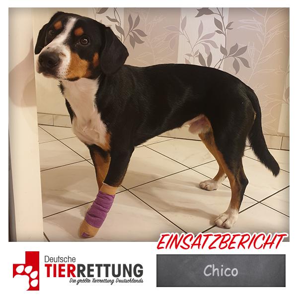 Tierrettung Einsatz: Chico