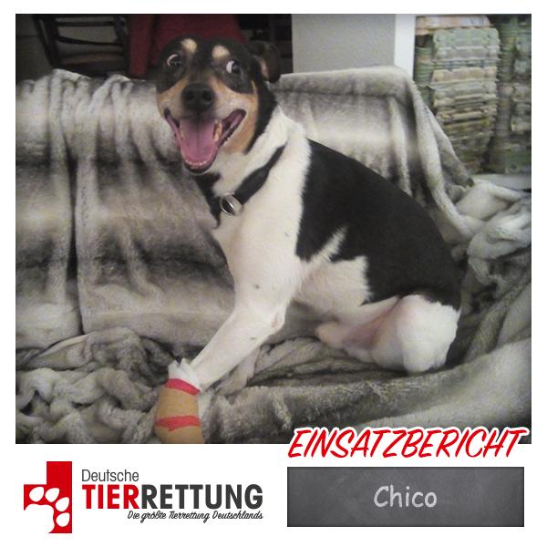 Tierrettung Einsatz: Chico in Essen