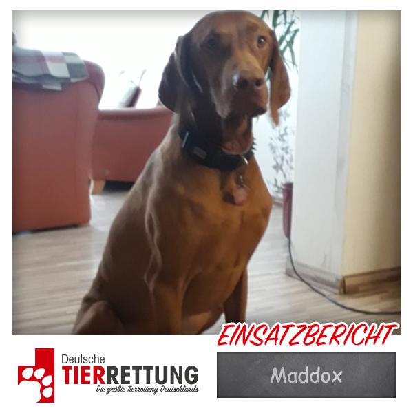 Tierrettung Einsatz: Maddox
