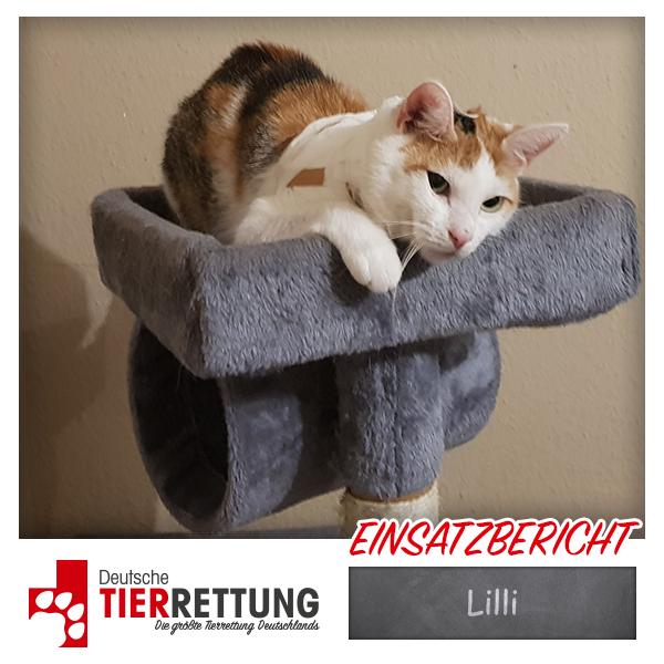 Tierrettung Einsatz: Lilli in Essen