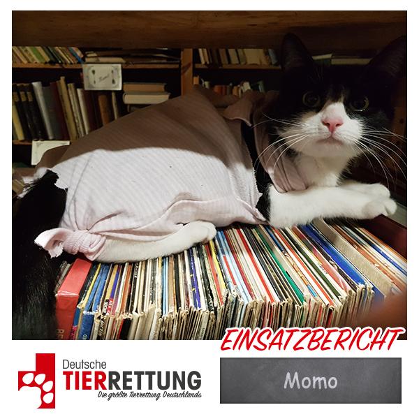Tierrettung Einsatz: Momo in Oberhausen