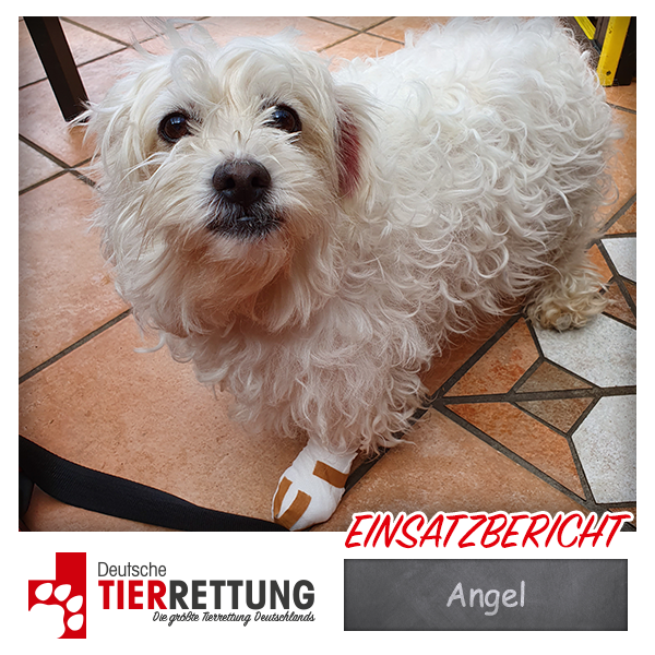 Tierrettung Einsatz: Angel in Marl