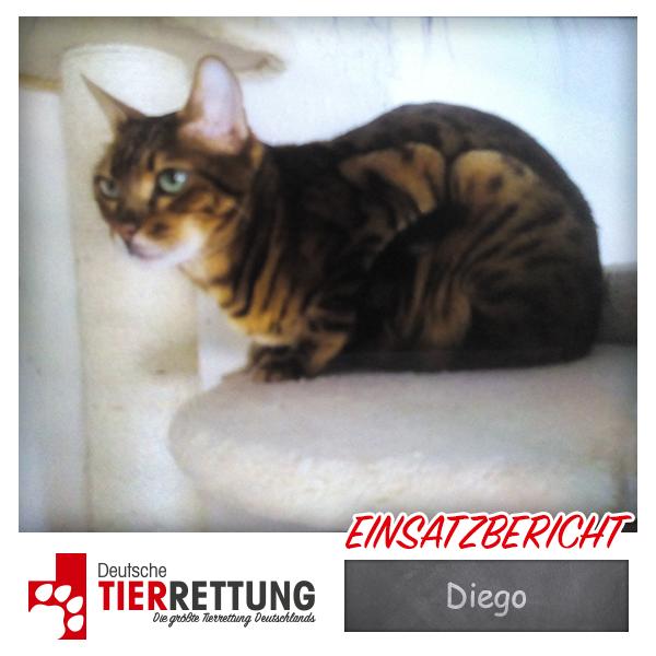 Tierrettung Einsatz: Diego in Essen