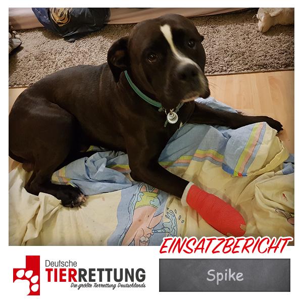 Tierrettung Einsatz: Spike in Erkrath