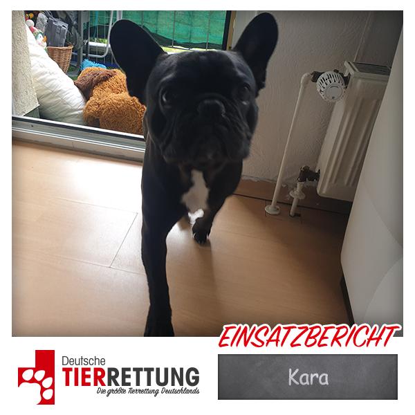 Tierrettung Einsatz: Kara in Dortmund