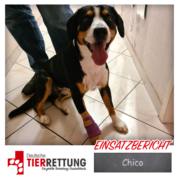Tierrettung Einsatz: Chico in Dortmund