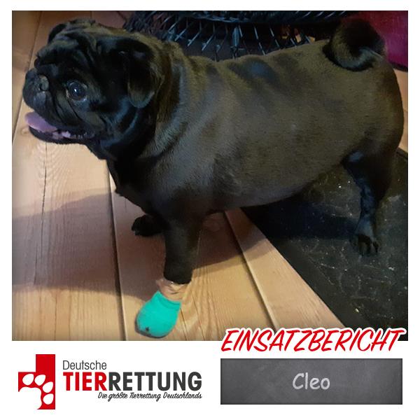 Tierrettung Einsatz: Cleo in Oberhausen