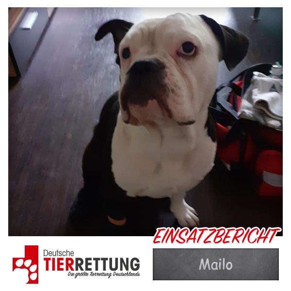 Tierrettung Einsatz: Mailo in Essen
