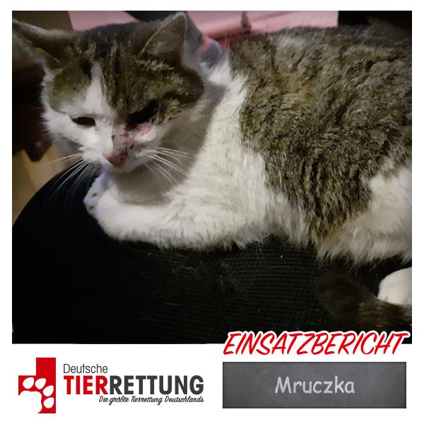 Tierrettung Einsatz: Mruczka in Mönchengladbach