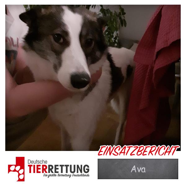 Tierrettung Einsatz: Ava in Wuppertal
