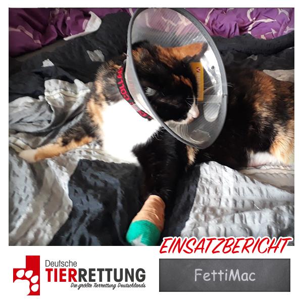 Tierrettung Einsatz: FettiMac in Hagen