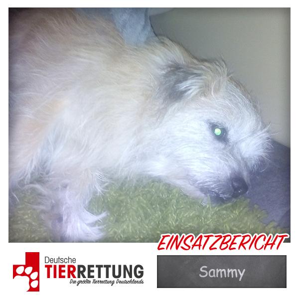 Tierrettung Einsatz: Sammy in Dortmund