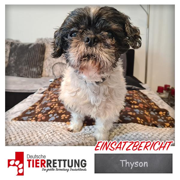 Tierrettung Einsatz: Thyson in Gelsenkirchen