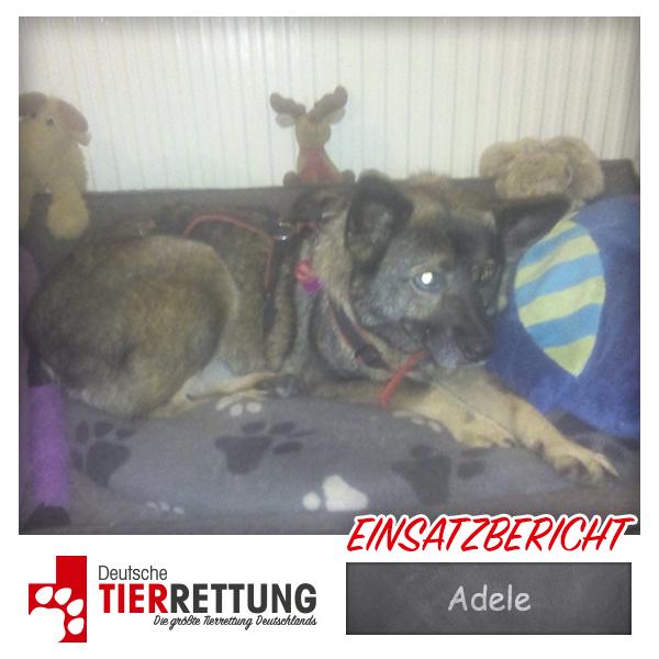 Tierrettung Einsatz: Adele in Duisburg