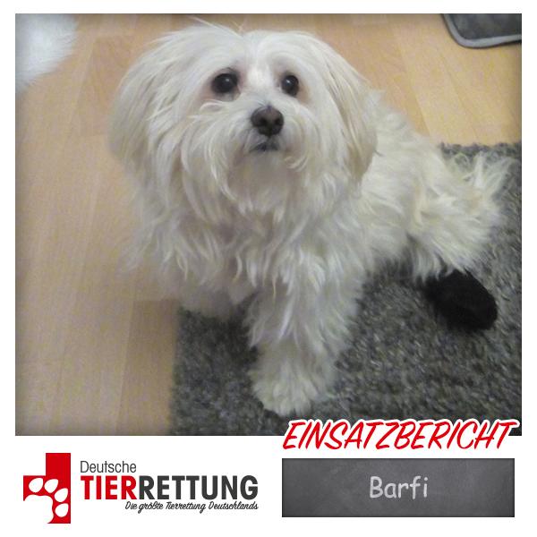 Tierrettung Einsatz: Barfi in Dortmund