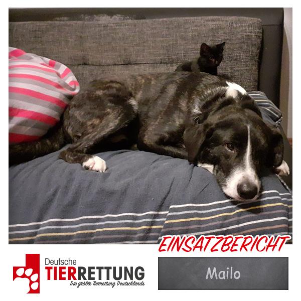 Tierrettung Einsatz: Mailo in Dortmund