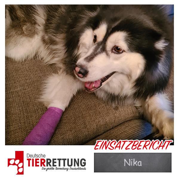 Tierrettung Einsatz: Nika in Recklinghausen