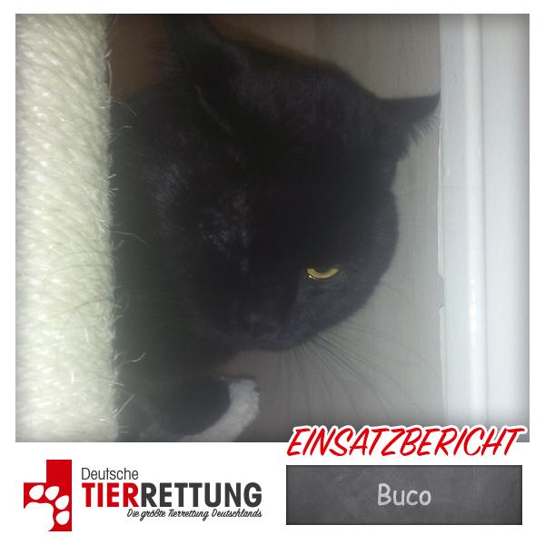 Tierrettung Einsatz: Buco in Münster