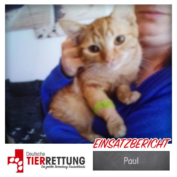 Tierrettung Einsatz: Paul in Iserlohn